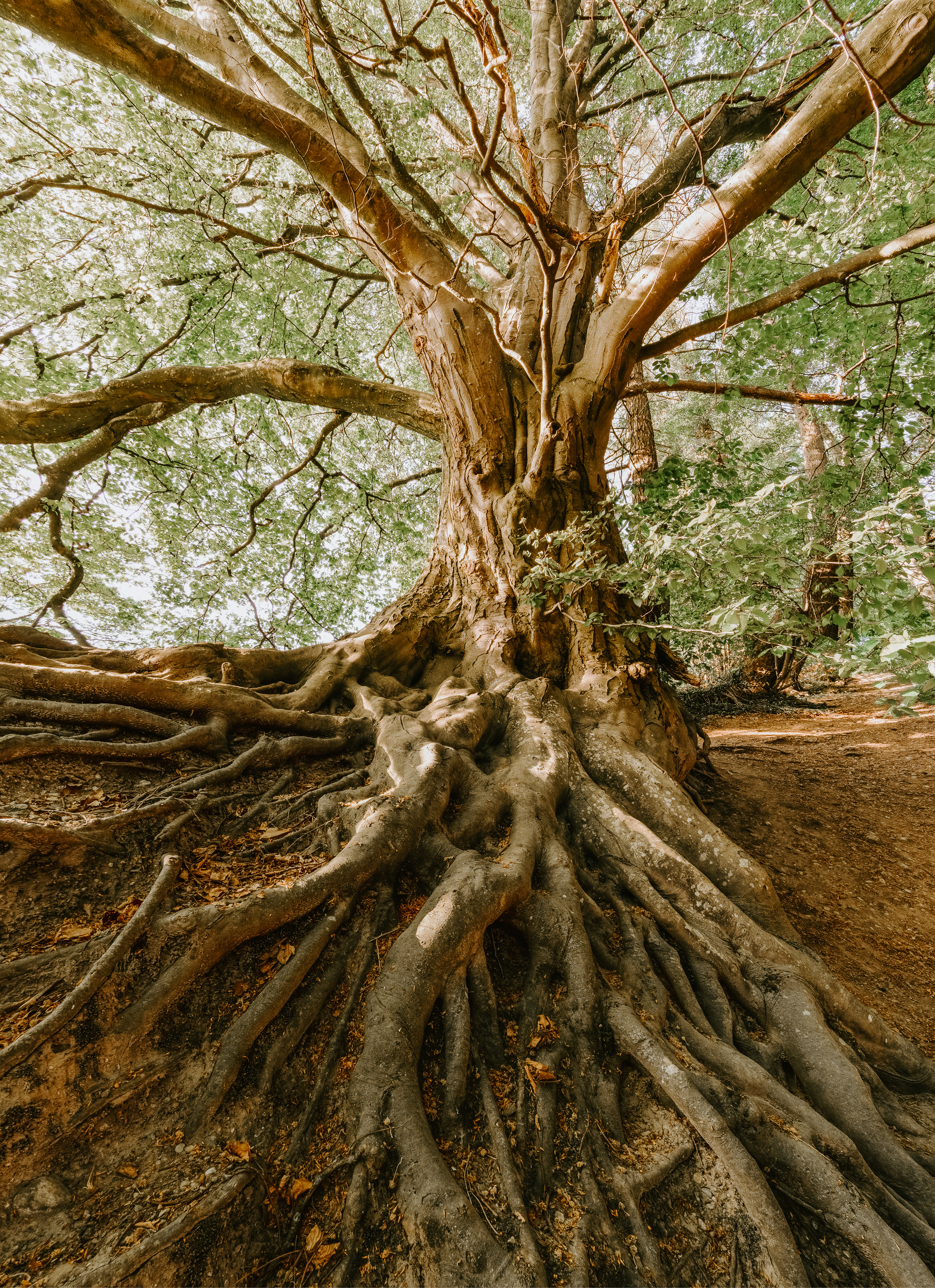 tree with strong roots